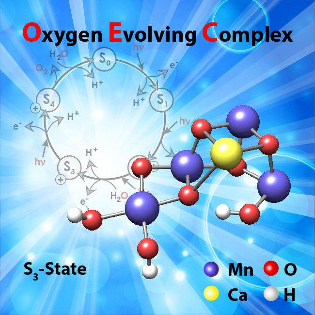 Die Struktur des in der Natur vorkommenden Mangan-Clusters, bevor die O-O Bindung entsteht (Mn – Mangan, O – Sauerstoff,Ca – Kalzium, H – Wasserstoff)