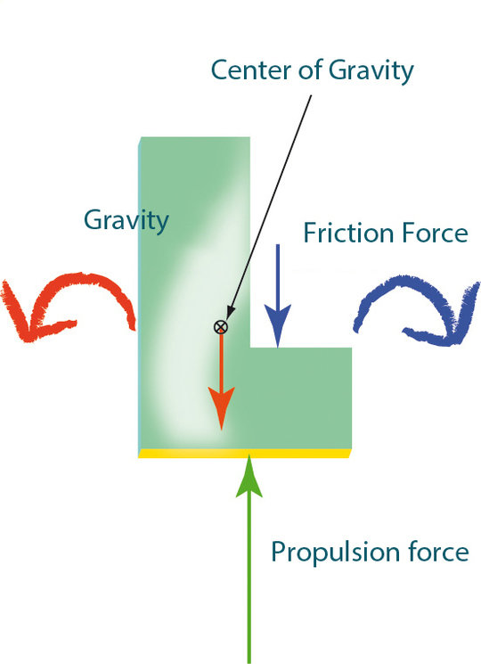 <p>Balance of forces: Because the centre of gravity of the L-shaped swimming body is shifted to the massive long arm on the left, gravity tends to rot