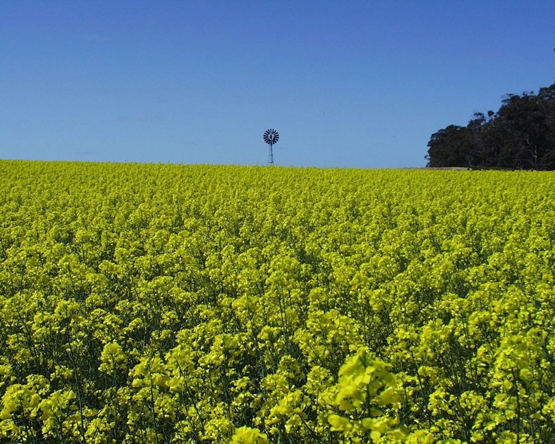 <p>Von wegen Klimaschutz: Bioenergie aus Raps und anderen Pflanzen zu gewinnen, trägt nur selten zur Stabilisation des Klimas bei.</p>