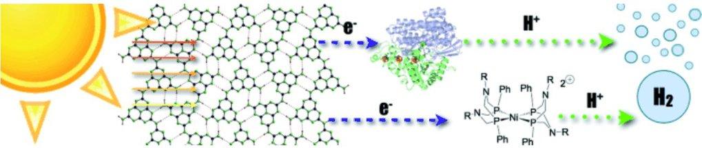 """Abb. 3: Schematische Darstellung der lichtinduzierten Wasserstoffentwicklung durch das polymere Kohlenstoffnitrid """"Melon"""" in Kombination mit [NiFeSe]-"""