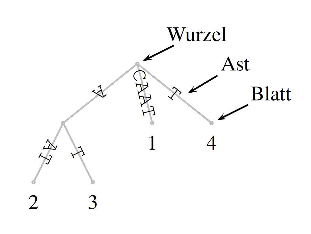 <p><strong>Abb. 3:</strong> Suffixbaum der Sequenz CAAT. Nähere Erläuterungen im Text.</p>