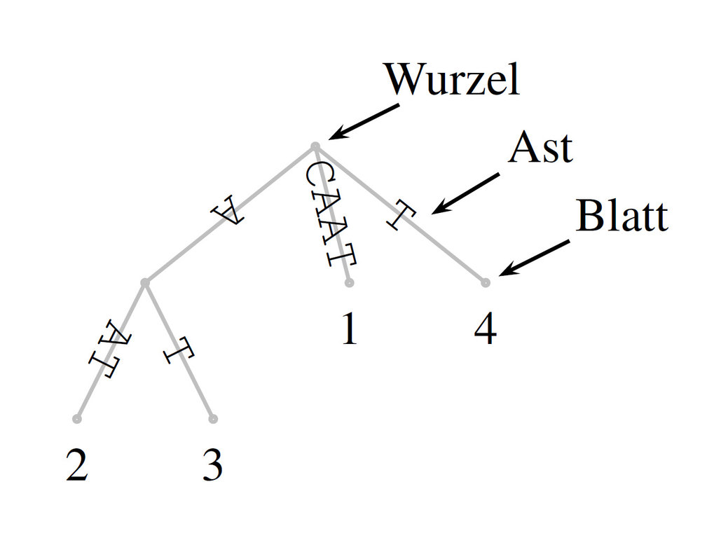 Abb. 3: Suffixbaum der Sequenz CAAT. Nähere Erläuterungen im Text.