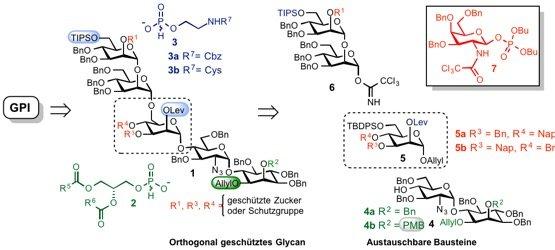 Abb. 2: Retrosynthetische Analyse einer allgemeinen Strategie für die Herstellung von GPI-Ankern. Die Glykanstruktur (schwarz-rot) wird zunächst durch