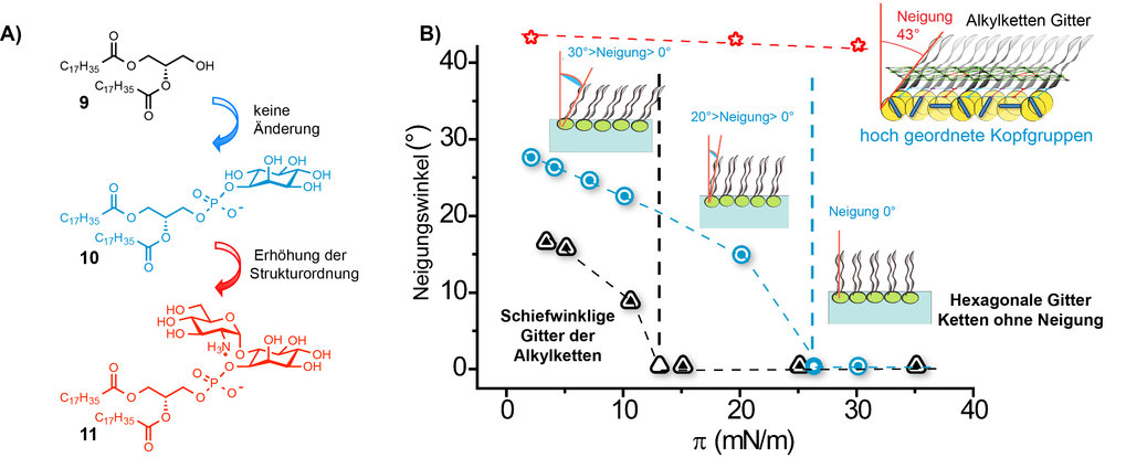 Abb. 4: A) Strukturen der untersuchten GPI-Fragmente. B) Strukturelle Veränderungen der Monoschichten von drei GPI-Fragmenten (Änderung des Neigungswi