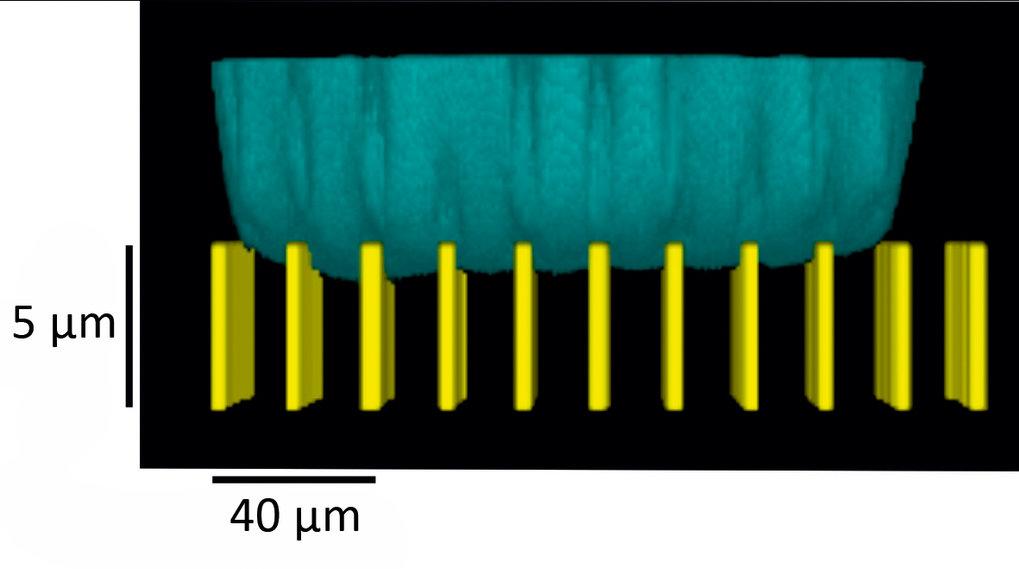 <p><strong>Abb. 2:</strong> Unterseite eines Wassertropfens auf einer Modell-Oberfläche aus zylindrischen Mikrosäulen. Das Bild wurde mit ei