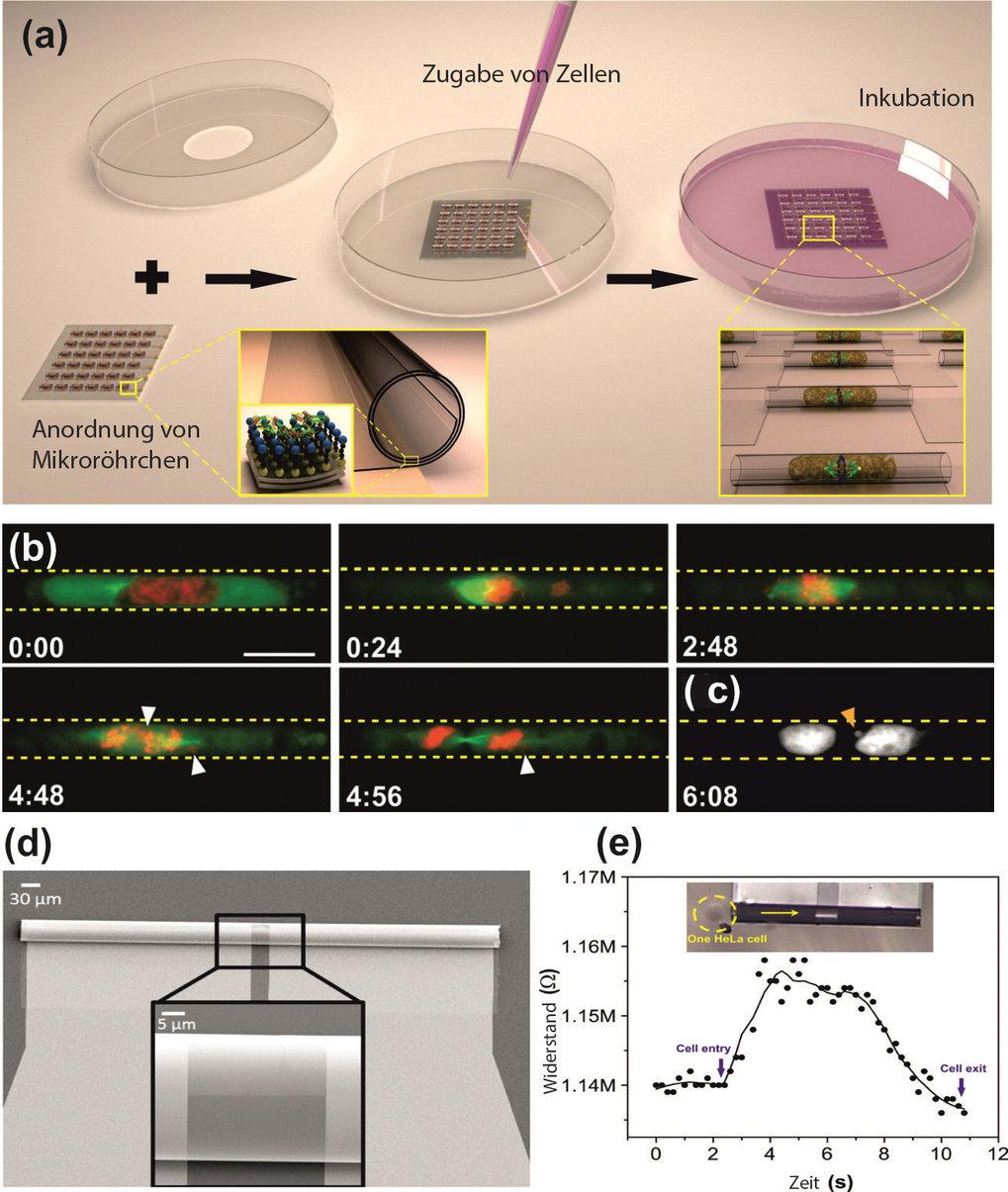 """<strong>Abb. 1:</strong> a) Schema eines """"Lab-in-a-tube"""": In dieser 3D-Zellanalyseplattform kann das Verhalten von Säugetierzellen be"""