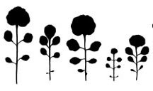 Das Behaarte Schaumkraut (Cardamine hirsuta) entwickelt eine große Vielfalt an Blattformen mit unterschiedlicher Fiederzahl: Variation im fünften Folg