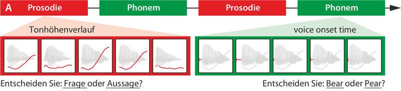 Die Probanden hatten zur Aufgabe, anhand der Tonhöhe zwischen einer Frage und einer Aussage zu unterscheiden. Als Vergleich zu dieser Prosodie-Au