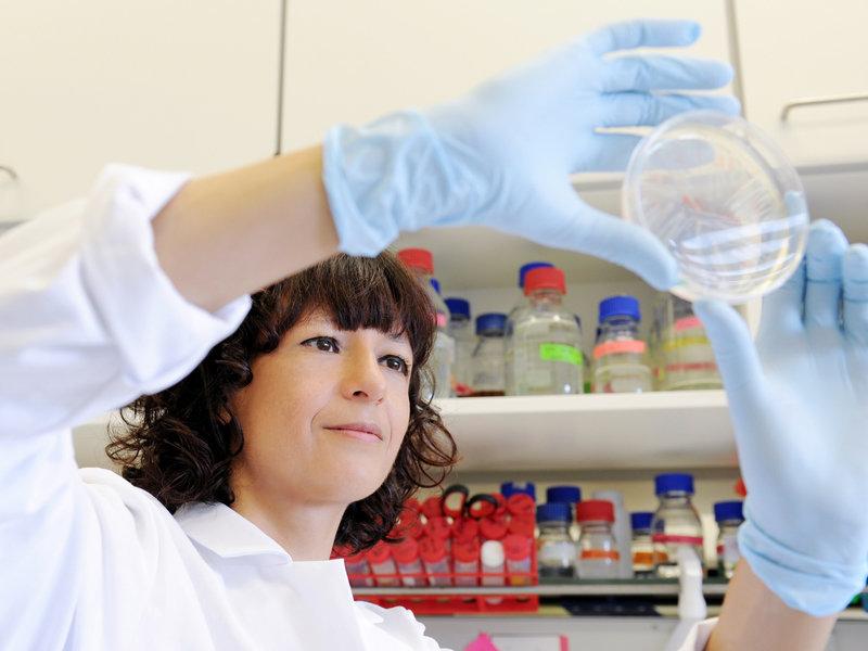 Die Forscherin und ihr Studienobjekt: Bakterien gilt die ganze Aufmerksamkeit Charpentiers. Sie will verstehen, wie die Mikroben Infektionen verursach