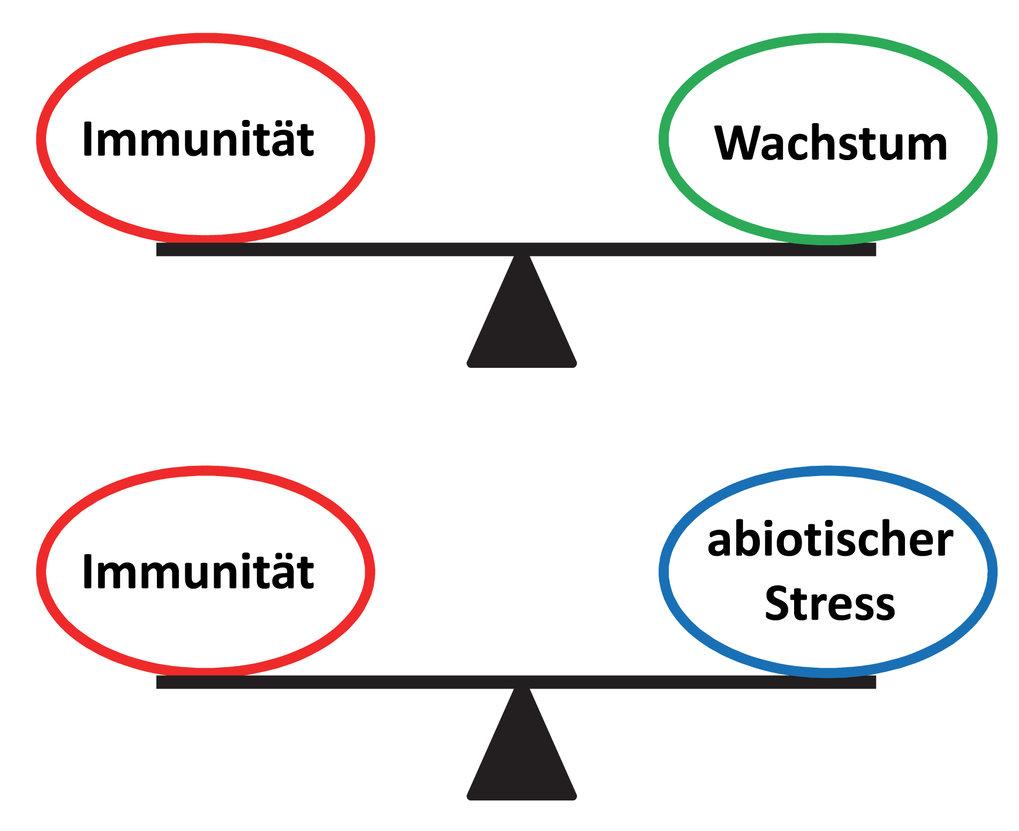 Abb. 1: Trade-offs zwischen Immunität und ausgewählten physiologischen Prozessen. Nur eine Balance garantiert, dass die Abwehr gegen Pathogene sich ni