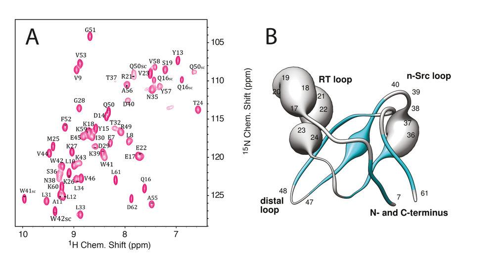 <strong>Abb. 2: (A)</strong> Mehrdimensionale Spektren werden genutzt, um Korrelationen von Resonanzfrequenzen für diejenigen Atomkerne zu erhalten, d