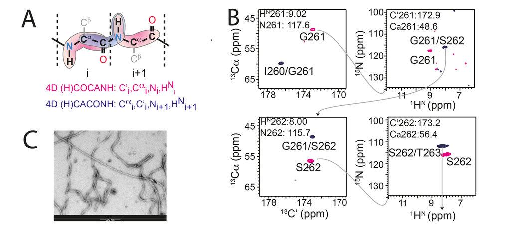 <strong>Abb. 3:</strong> Wenn nur Kleinstmengen an Protein für NMR Messungen hergestellt werden können, sind für die Signaldetektion Protonen die Atom