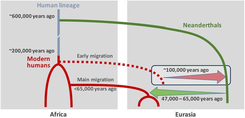 Early gene flow from modern humans into Neanderthals
