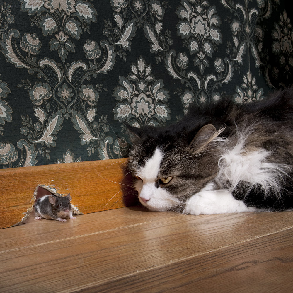 Before a cat attacks, the mouse perceives smells and sounds. Filtering them out from countless other stimuli helps the mouse to be more prepared for the next attack and to react more quickly.<br /><br /><br />