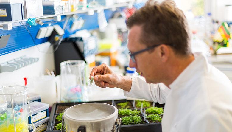 Detlef Weigel, Direktor am Max-Planck-Institut für Entwicklungsbiologie, über Genom-Editierung als Möglichkeit, gezielt bessere Nutzpflanzen zu züchte