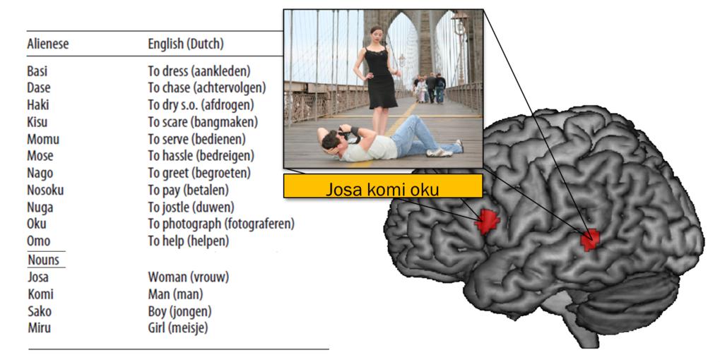 Dem Gehirn beim Sprachenlernen zugeschaut | Max-Planck-Gesellschaft