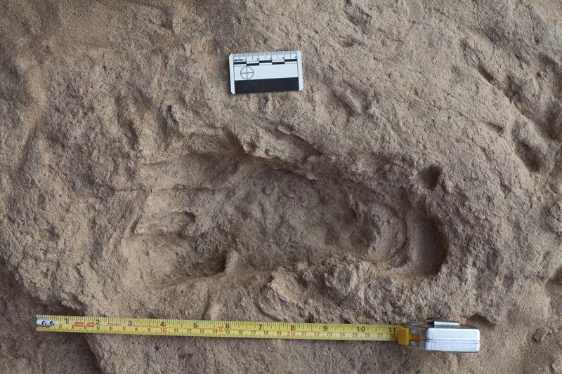 1,5 Millionen Jahre alte Fußabdrücke belegen, dass der <em>Homo erectus</em> bereits über eine ähnliche Fußanatomie und -mechanik verfügte wie wir.