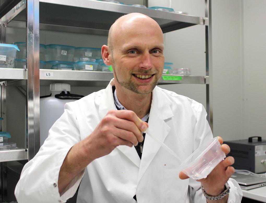 Jochen Rink hat zusammen mit Kollegen am Heidelberger Institut für Theoretische Studien das Erbgut des Plattwurms entschlüsselt. Mit diesem Wissen läs