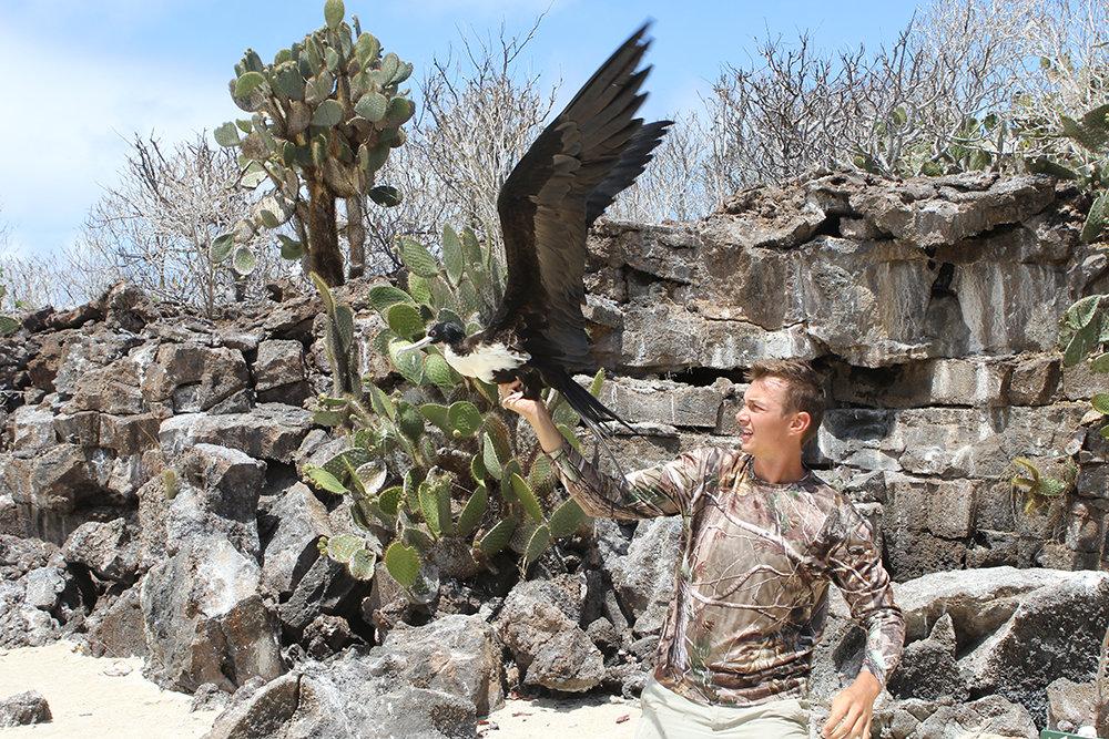 Der Biologe Bryson Voirin entlässt einen Fregattvogel, den er besendert hat, in die Freiheit.