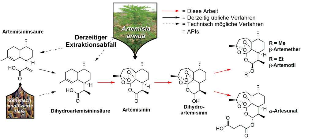 Abb. 3: Ein divergenter Prozess zur Herstellung der vier essenziellen Artemisinin Derivate zur Malaria-Behandlung