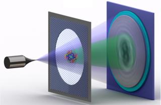 Schema der Elektronen-Holografie einzelner Proteine: Eine Metallspitze, deren Ende nur aus wenigen Atomen besteht, sendet einen Strahl vergleichsweise