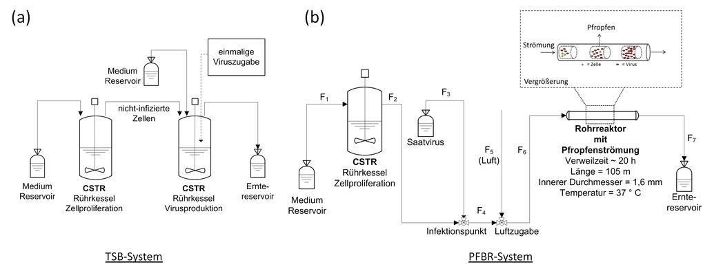 <strong>Abb. 1:</strong> Prozessschemata für zwei kontinuierliche Bioreaktorsysteme zur Produktion von Influenza-Viren. (a) Das 2-Kaskaden-Rührkesselr