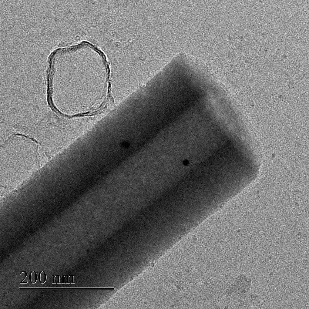 Beating their own record: the tube that Samuel Sanchez and his team of researchers transformed into a tiny jet engine for nanorobots with urease coati
