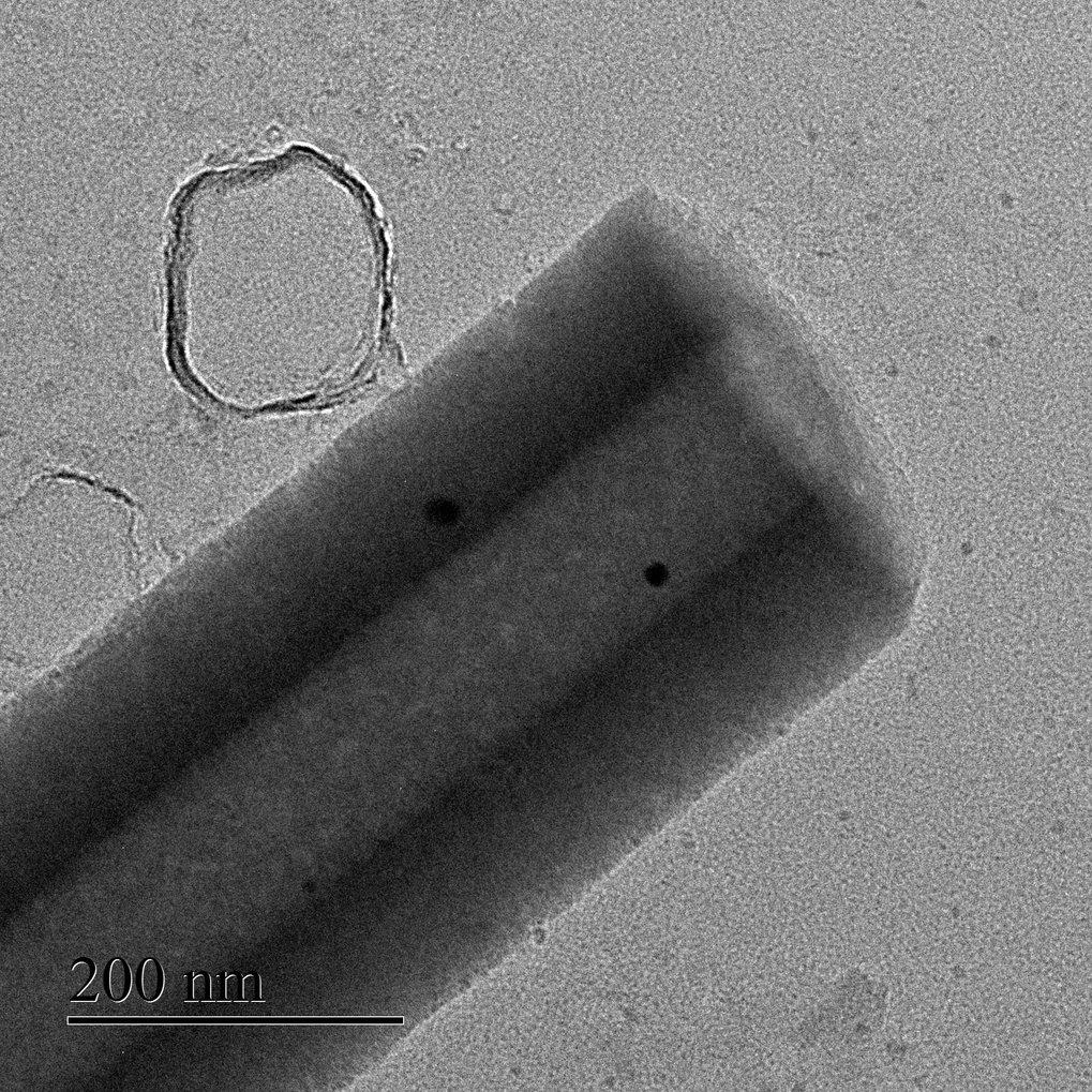 Den eigenen Rekord unterboten: Der Durchmesser der Nanoröhrchen, die Forscher um Samuel Sanchez mit einer Urease-Beschichtung in ein winziges Düsentri
