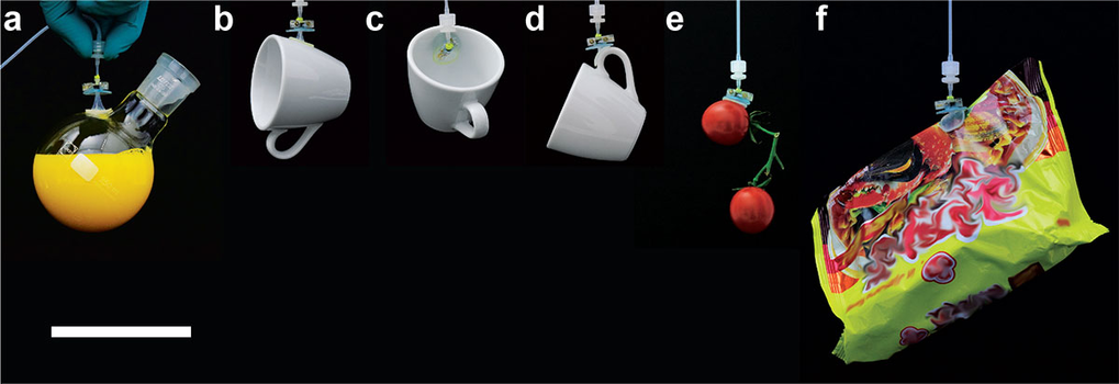 Demonstration of the proposed soft adhesion-based gripping system holding various 3D objects such as (A) a rounded glass flask filled with 200 mL of l