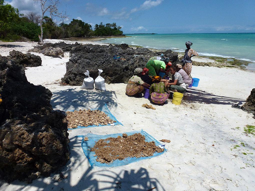 An einer Ausgrabungsstätte auf der Insel Unguja, die zum Sansibar-Archipel vor der ostafrikanischen Küste gehört, bergen die Forscher historische Pfla