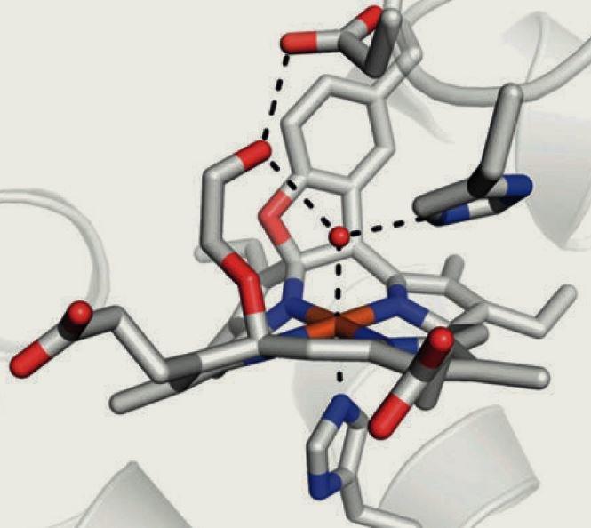 Wie die Mikroben mit Hydrazin umgehen, beschäftigt Thomas Barends und seine Kollegen am MPI für medizinische Forschung.