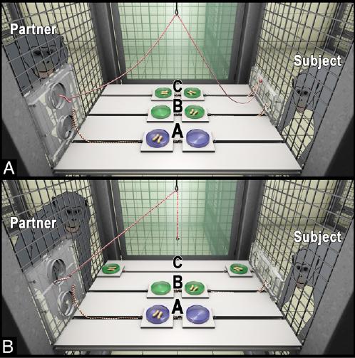 """Aufbau des Verhaltensexperiments: (A) Ausgangssituation: Aus der Perspektive des Teilnehmers (""""Subject"""") kann sich der Partner für Option A entscheide"""