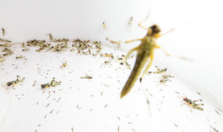 Why animals swarm for swarms