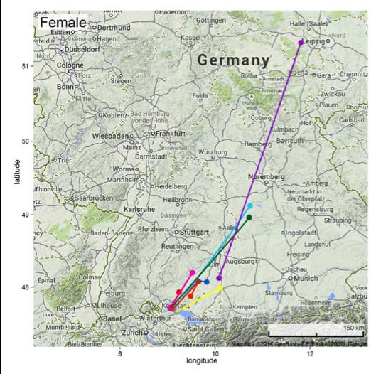 Zwei Wochen nach dem Erwachen aus dem Winterschlaf brachen weibliche Abendsegler 2012 vom Bodensee zu den ersten Etappen Richtung Nordosten auf. Eines