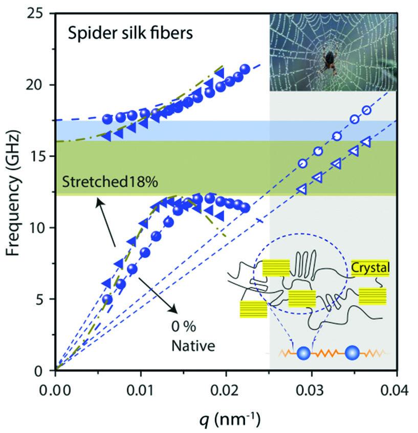 Abb. 2: Phononische Dispersionsrelation gemessen an Spinnennetzfäden. Als Schema ist das strukturell-mechanische Modell gezeigt, mit dem die Bandlücke