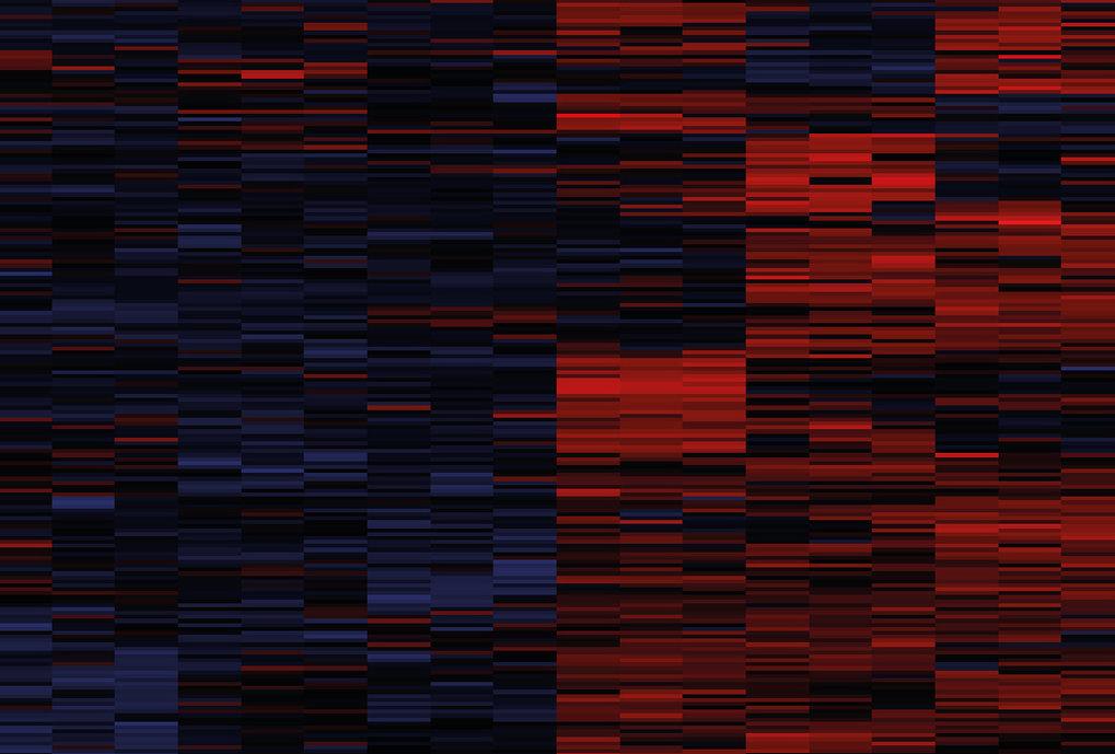 Ausschnitt aus einer sogenannten Heatmap, eine Übersichtsdarstellung analysierter Proteine, die erstmals in einem umfangreichen Herzatlas zusammengefa