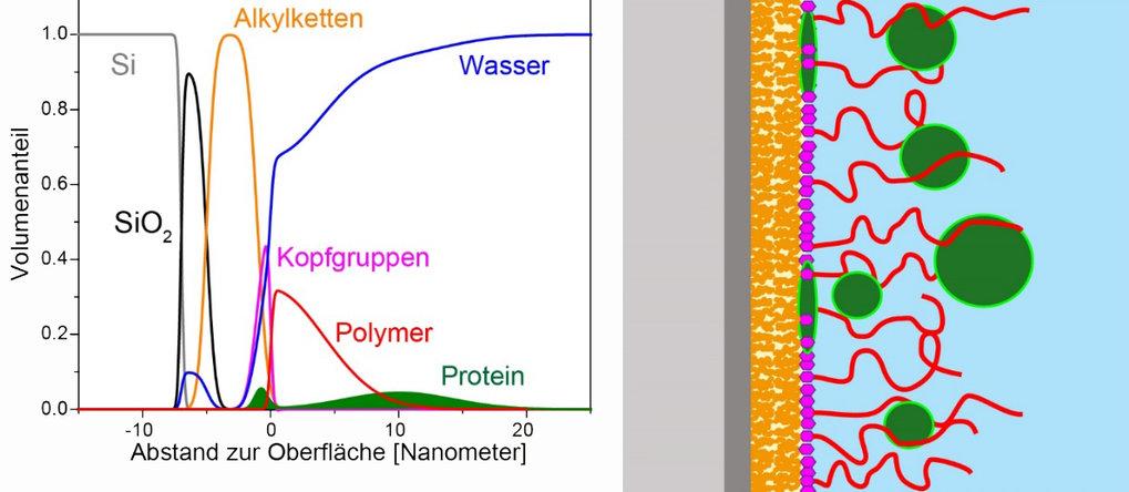 Abb. 1: Strukturelle Charakterisierung dünner Molekülschichten. (oben) Neutronenreflektometrie liefert die räumliche Verteilung verschiedener chemisch