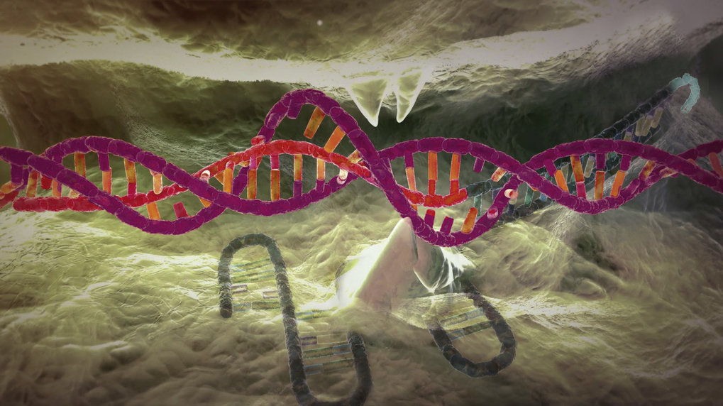 CRISPR/Cas9 – molecular scissors made of enzyme and RNA