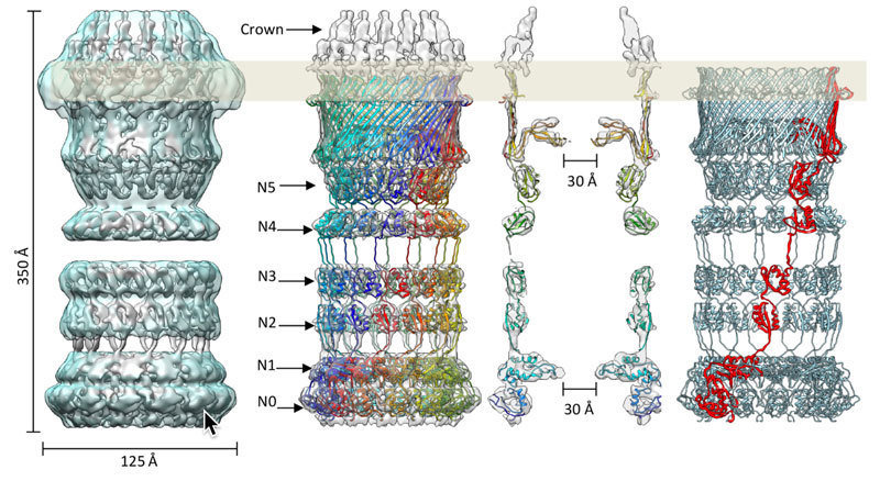 3D-structure of secretin