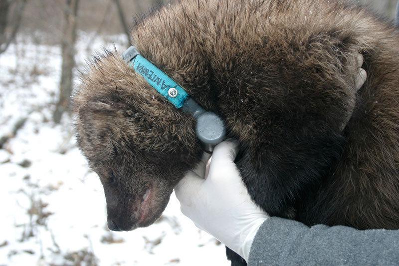Wissen zum Schutz der Arten