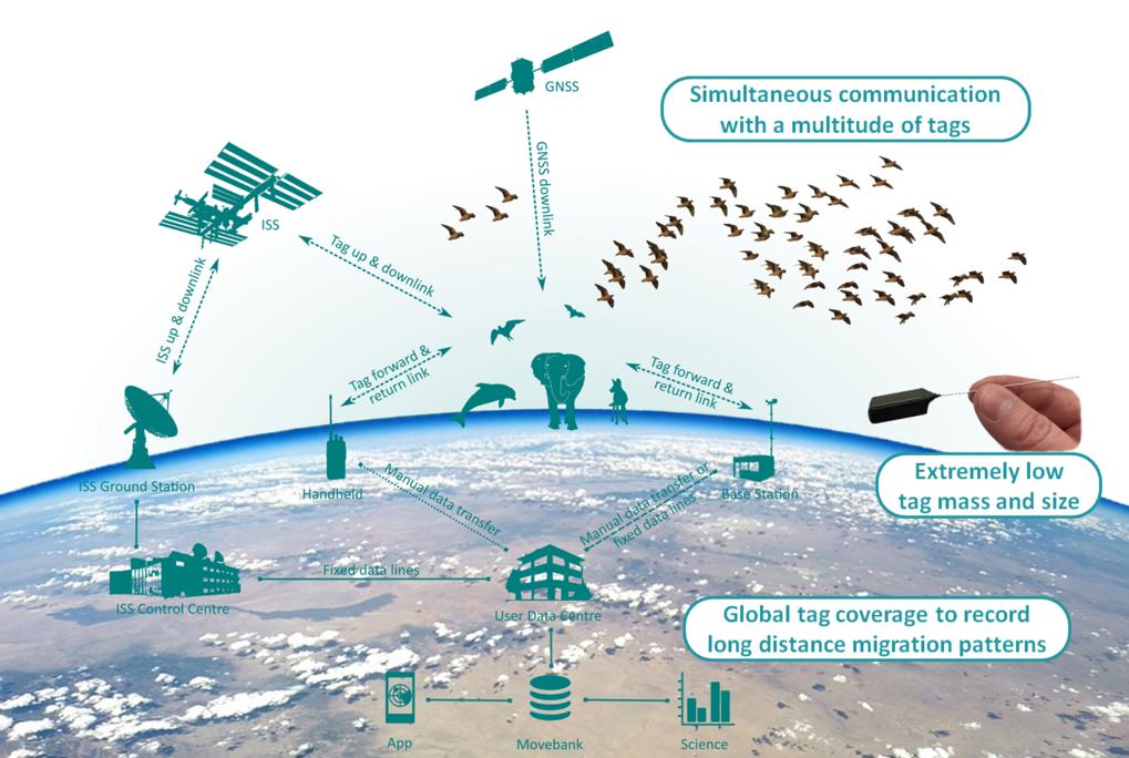 Das Internet der Tiere: So funktioniert das Tierbeobachtungssystem Icarus