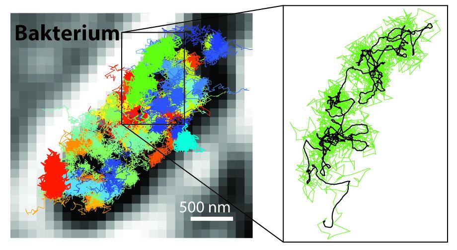 Mit neuen Mikroskoptechniken wie dem MINFLUX-Mikroskop von Stefan Hell können Forscher Nanometer-große Zellstrukturen in Echtzeit beobachten. Ein Beis