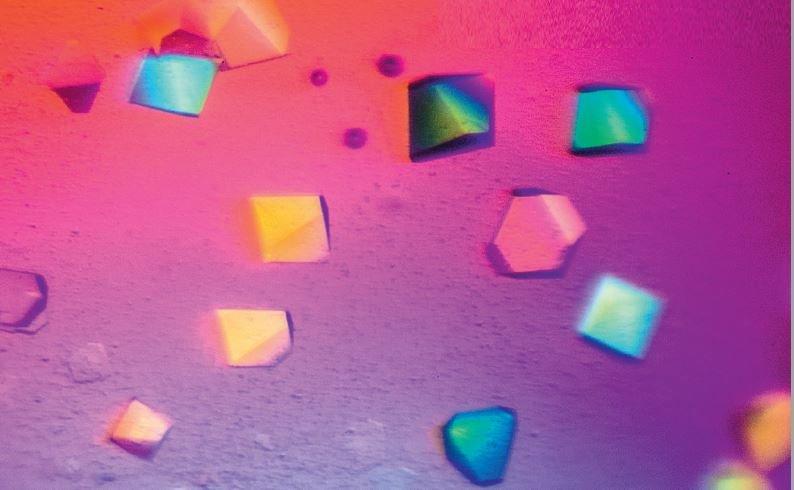 Tübinger Forscher untersuchen, wie sich springende Gene im Erbgut vermehren können