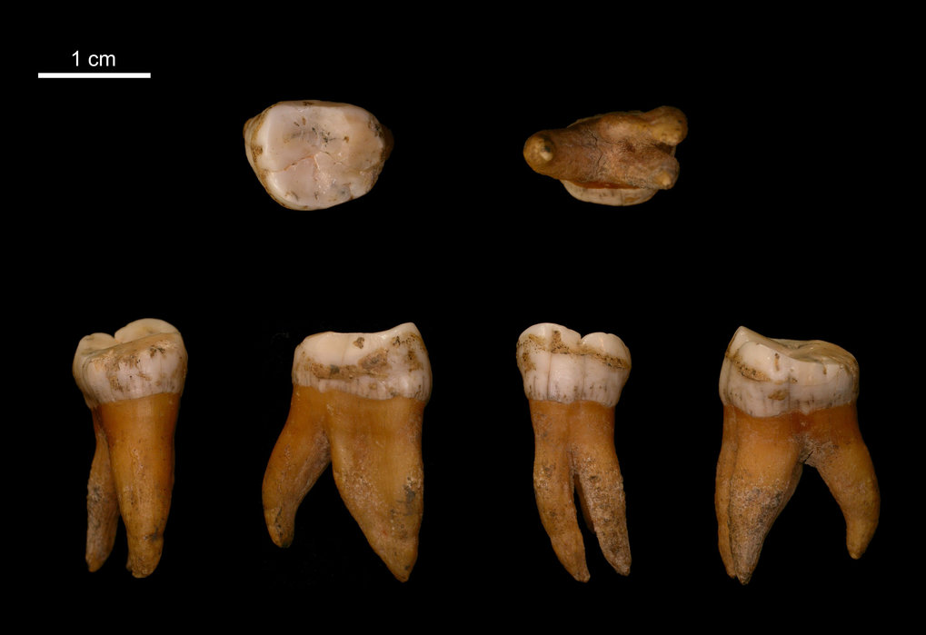 New insights into the late history of Neandertals