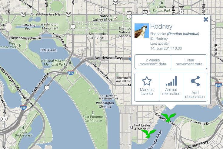 Verfolgen Sie mit der Animal Tracker App die Routen von Wildtieren auf der ganzen Welt fast in Echtzeit