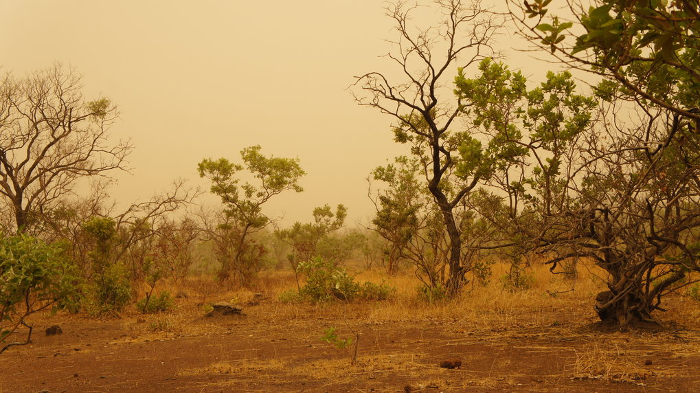 In Fongoli im Senegal steigen die Durchschnittstemperaturen während der Trockenzeit auf etwa 37 Grad Celsius an.
