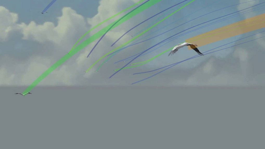 Flight of a leader bird (orange) travelling between two thermals from the point of view of a follower (animation). Followers benefit from the thermal exploration of the leaders ahead, but spend more time in energetically costly flapping flight to keep up with the flock. Again, the flight path of each bird is color-coded based on its overall flapping activity from blue (low) to orange (high).