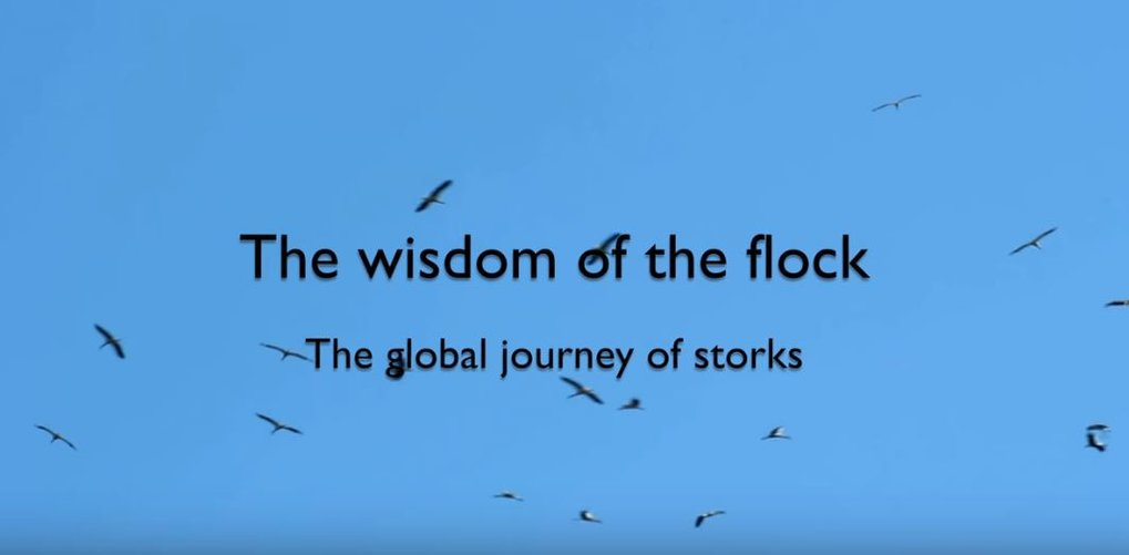 The wisdom of the flock: the global journey of storks