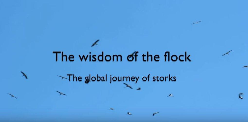 Eine Video-Zusammenfassung zur Studie