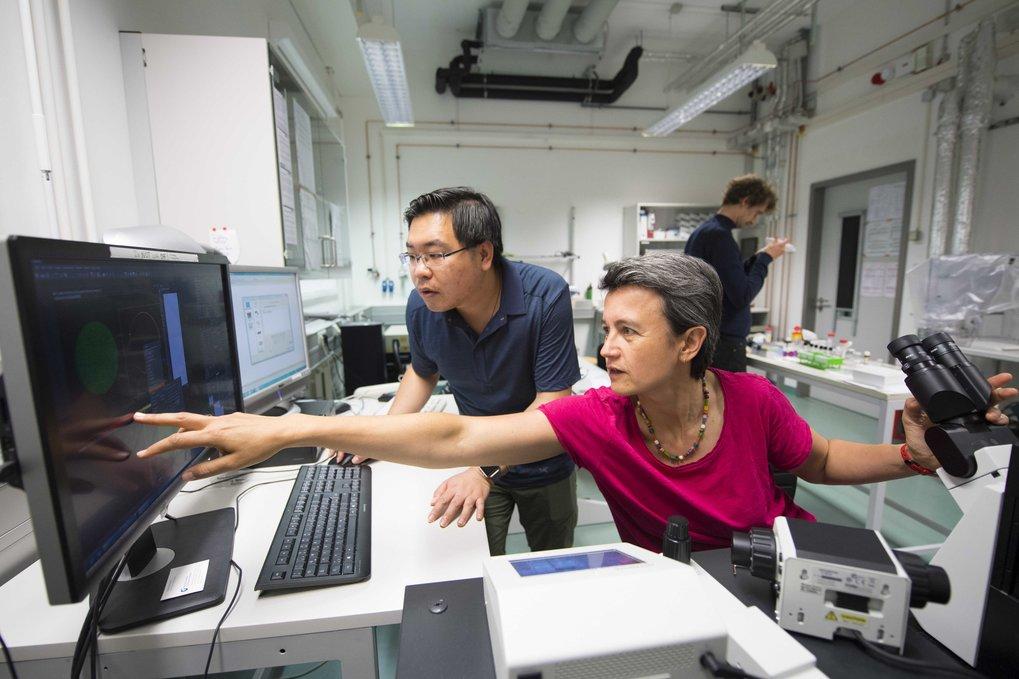 Am Rechner begutachten Rumiana Dimova und ihr Mitarbeiter Ziliang Zhao die Ergebnisse ihrer Zwei-Phasen-Experimente.